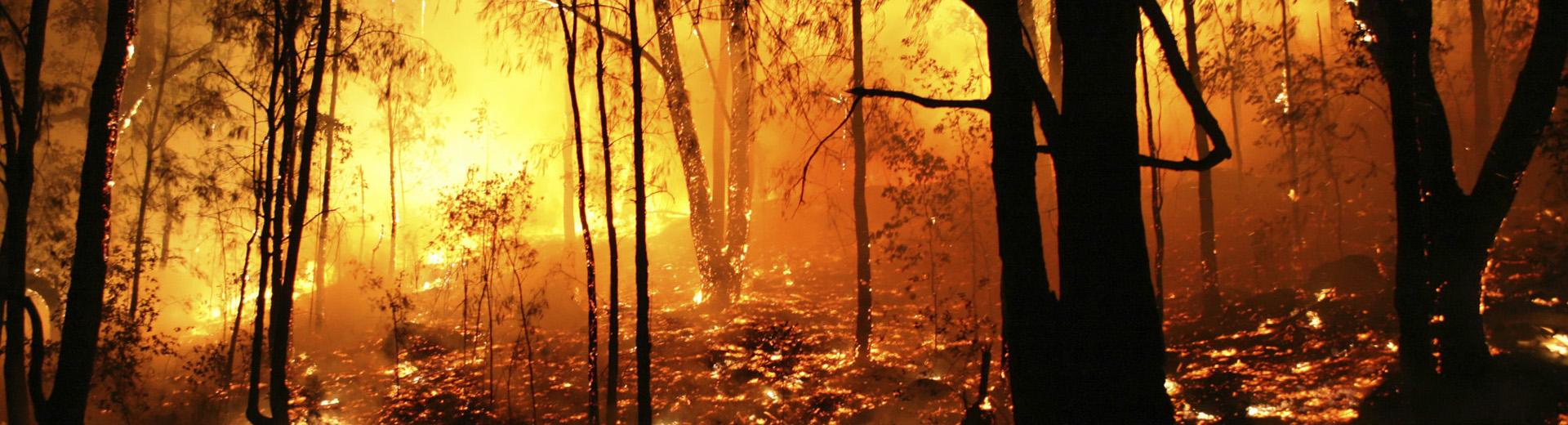 Equipamiento profesional contra incendios forestales