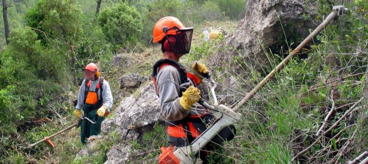 EPI´s para los trabajos forestales