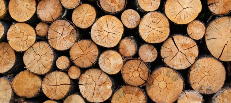 Riesgos derivados del trabajo forestal