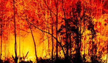 Evitar los incendios forestales es responsabilidad de todos