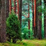 riqueza medioambiental
