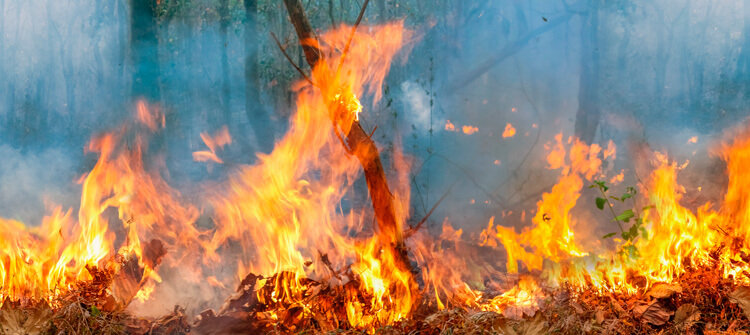 Cómo evitar los incendios forestales